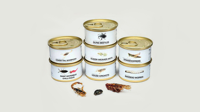 Edible Bugs Gift Pack