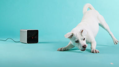 Stay Connected to Your Pet with Petcube