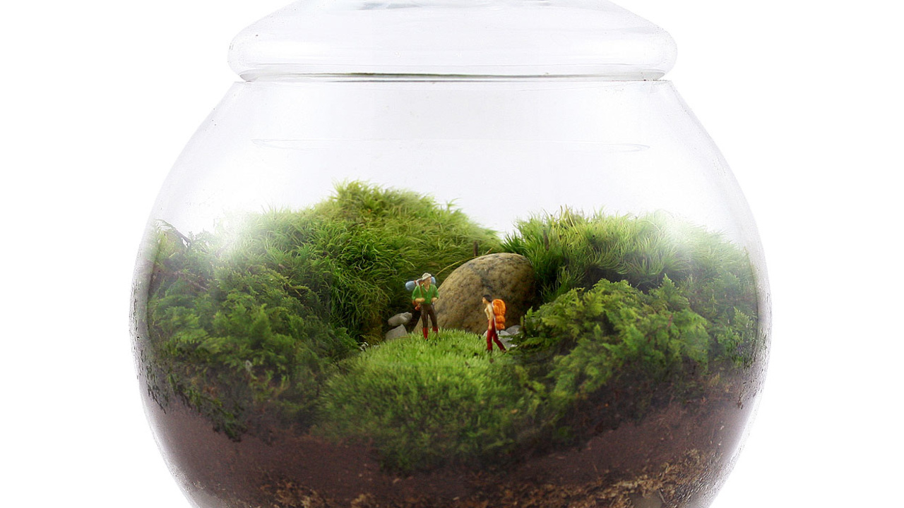 Uncharted Territory by Twig Terrariums
